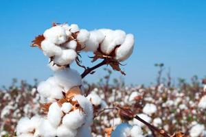 进口棉花检验检疫法律法规及相关规定